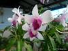 Udorn Sunshine Orchid Farm