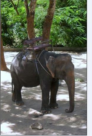 Wang Pho Elephant Camp