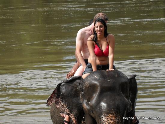 wang-pho-elephant-camp-Thailand