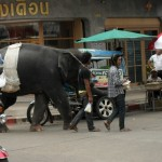 Elephants on the Streets of Thailand