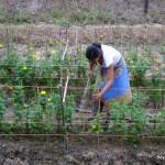 Thailand At Work – Village Flowers