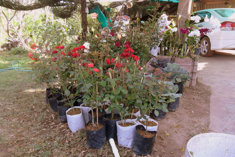 flowers-phu-rua-loei