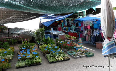 plants-sale-soi-buakhao-market-pattaya