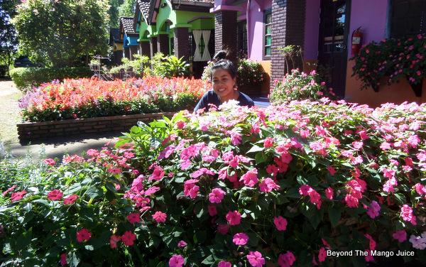 phu-rua-flower-festival-2014