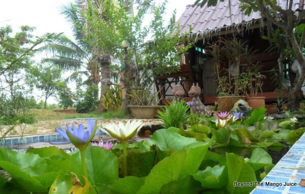 thai garden pond