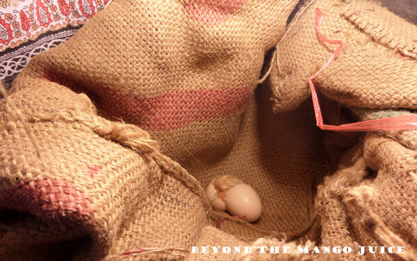 guinea fowl keet hatching