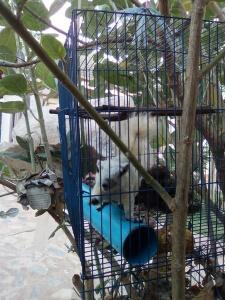 thai squirrel
