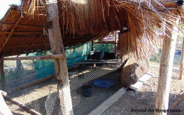 bird farm guinea fowl